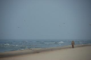 Plaża 의 이미지. poland polska krynica morska zalew morze bałtyk zatoka bałtyckie gdańska mierzeja wiślana wiślany