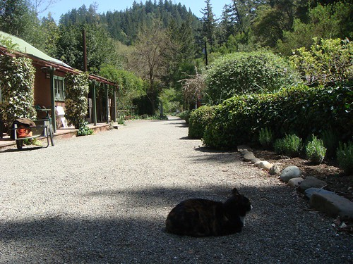Cheap And Hidden Hot Springs In Magnificent Mendocino