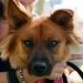 Nala A0753628 by LA City Shelter Pets