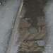 Small photo of puddle