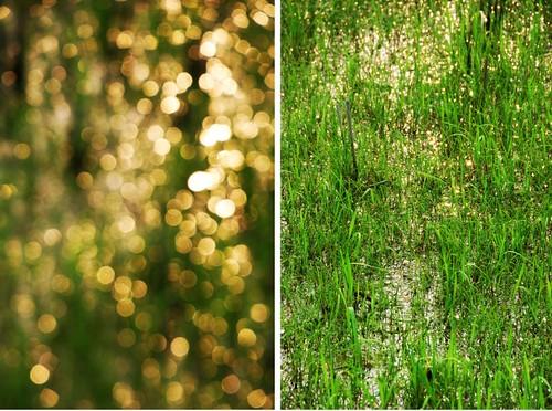 china light green field grass ball gold golden bokeh mel melinda wuyuan jiangxi 江西 婺源 hbw chanmelmel melindachan