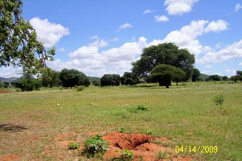 tanzania peacecorps 2009 agroforestry dodoma treesftf mvumi