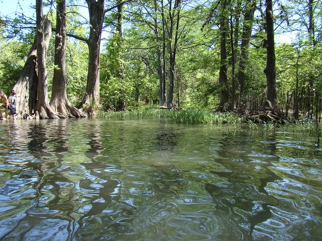 Blue Hole Wimberley Park Cypress Rings