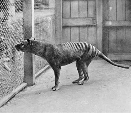animals that are extinct