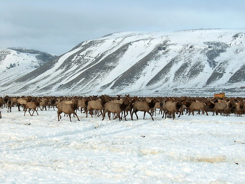Photo of National Elk Refuge