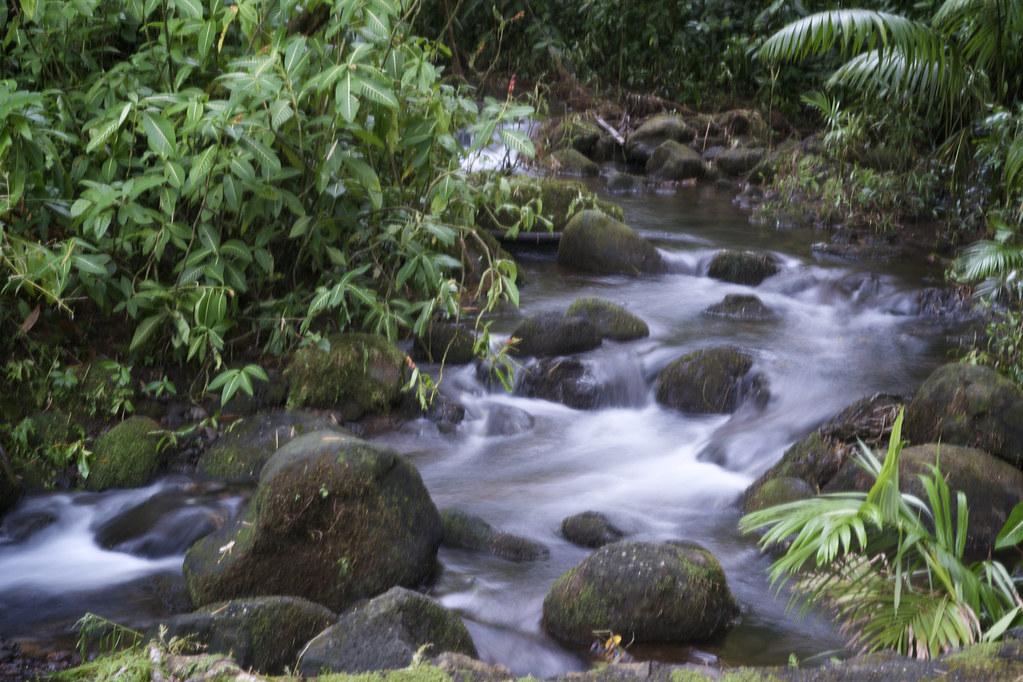 Lush River at Akaka Falls