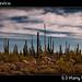 Cactus forest in Catavina, Mexico