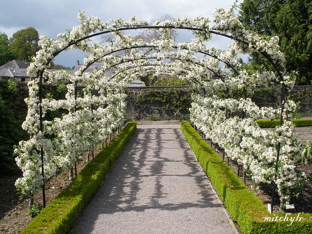 Tunnel Of Blossom