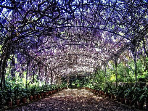 Algu m a sabe nomes de trepadeiras floridas yahoo for Jardin botanico de malaga