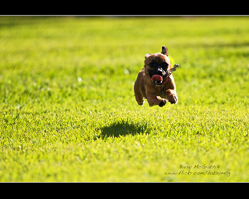 park dog canon eos action may brisbane cupcake quick 2009 30d canonef70200mmf4lisusm bazzymcg barrymcgrath