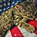 American Kitty Part I