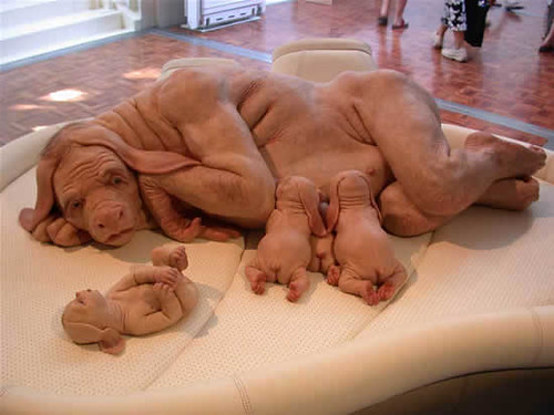 half human half pig woman this is real this picture