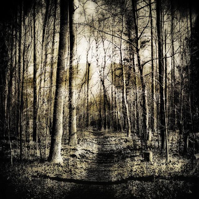 Dark Forest Path   Fli...