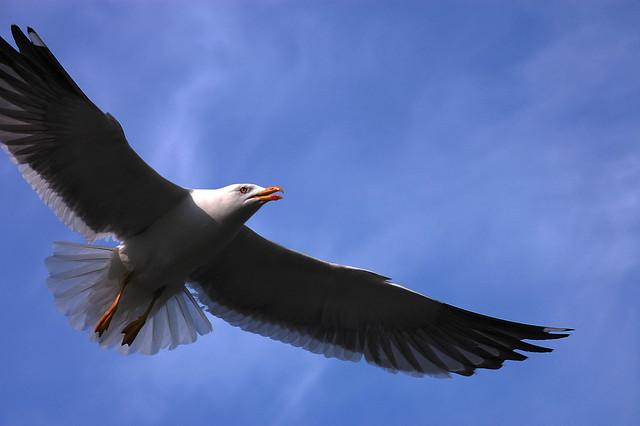 a majestic seagull in flight