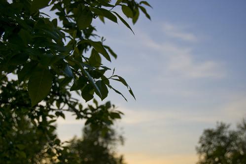 sunset tree leaves rolla d40
