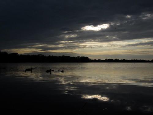 wisconsin river babies ducks stevenspoint