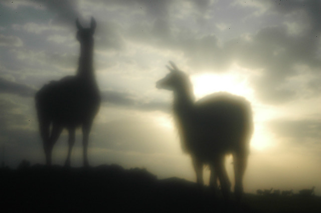 Bavaria Lamas - zone sieve photo