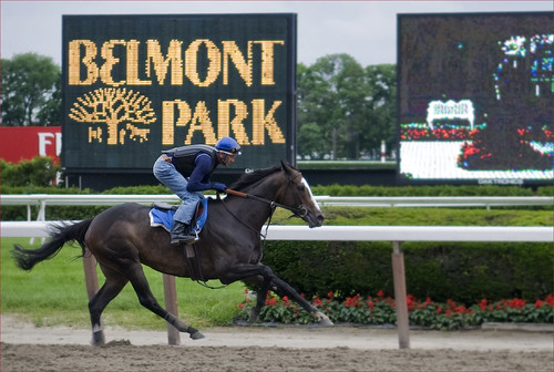 Belmont Track by Alida's Photos