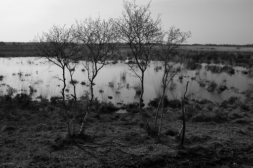 Bargerveen in B&W