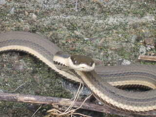 Snakes on the dam!!