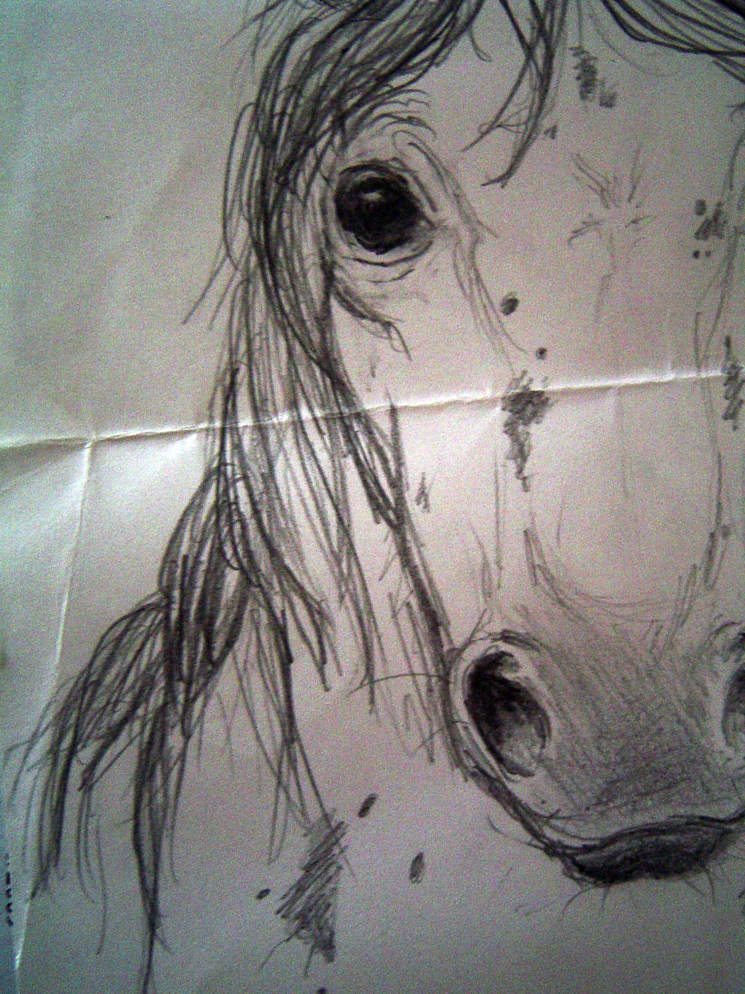 Horses Coloring Pages #3
