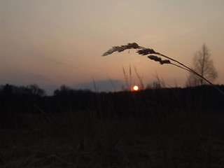 Long Grass Sunset No Flash