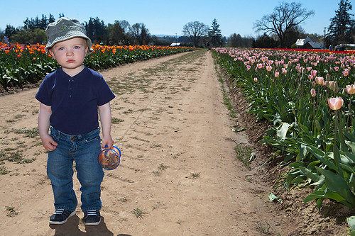 Yep, There Are Tulips Down This Row Too