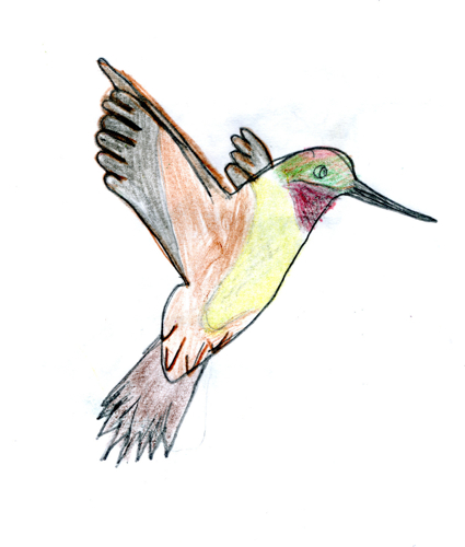 Rufous hummingbird drawing - photo#20