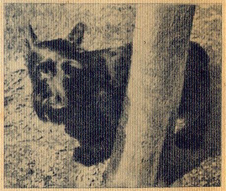 Século Ilustrado, No. 518, December 6 1947 - 28a