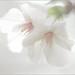 White by Bahman Farzad