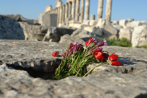 Springtime in Syria by CharlesFred
