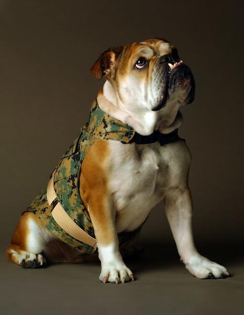 Pet Depot Dog Grooming Fort Payne