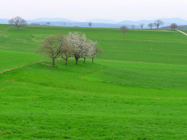 A propos de la douceur du printemps