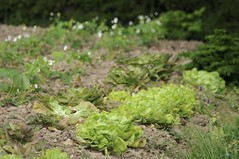 131x365x2009: salad