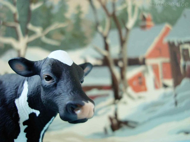 dairy-cow