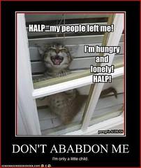 Don't Abandon Me #6