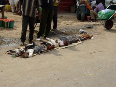 Wuse Market Chickens