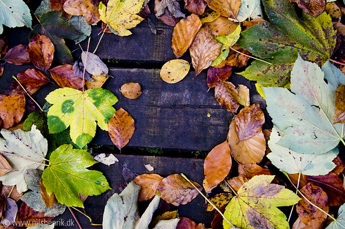 Multicoloured autumn leaves by nilshenrik.dk