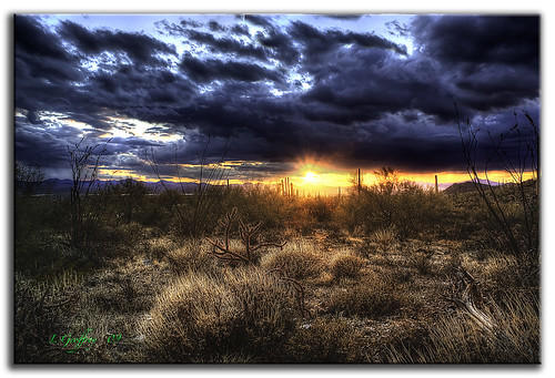 park sunset arizona mountain desert tucson np saguaro