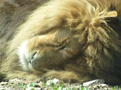 Even a king can be tired