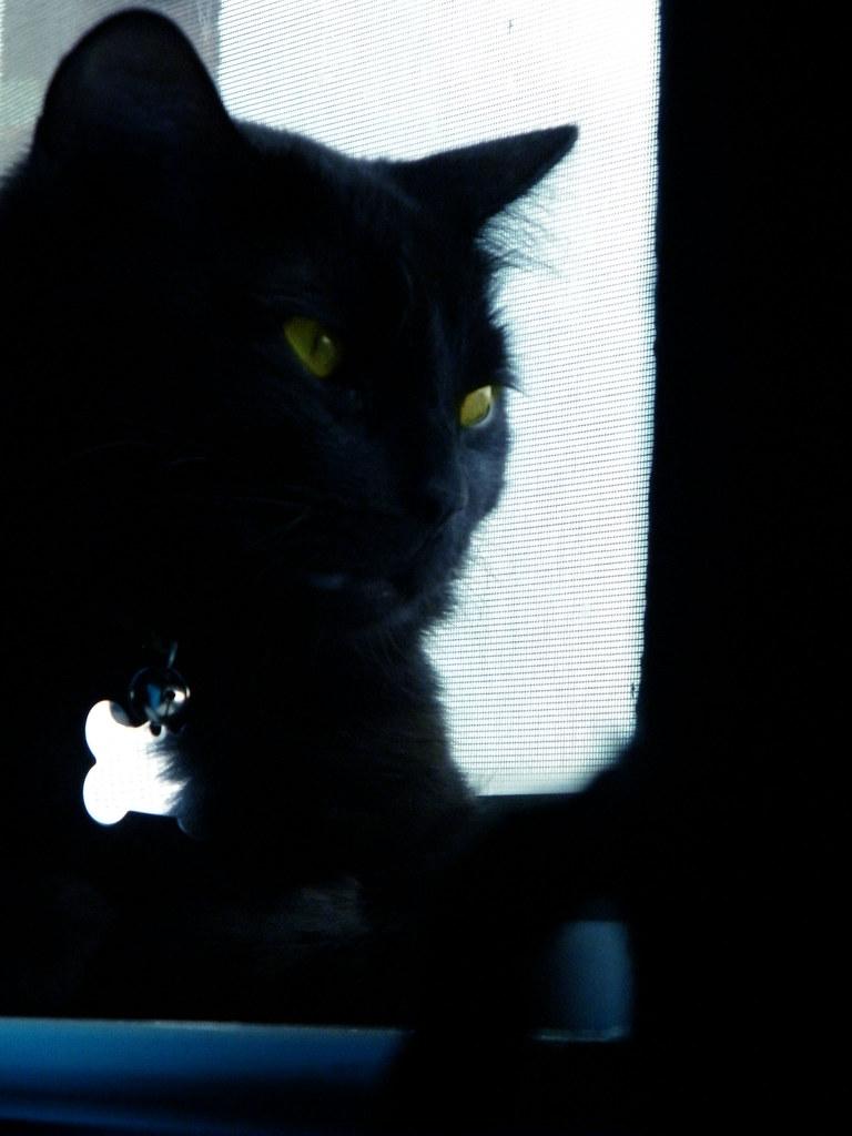 funeralshadowcat's most interesting flickr photos | picssr