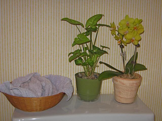 Bathroom Plants Flickr Photo Sharing