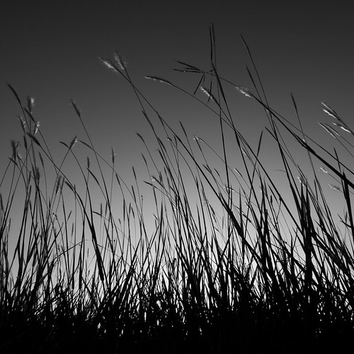 sky blackandwhite grass dark square tall standtall 500x500 explored