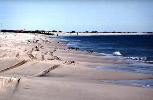 Parque Nacional do Banco de Arguim, Mauritânia