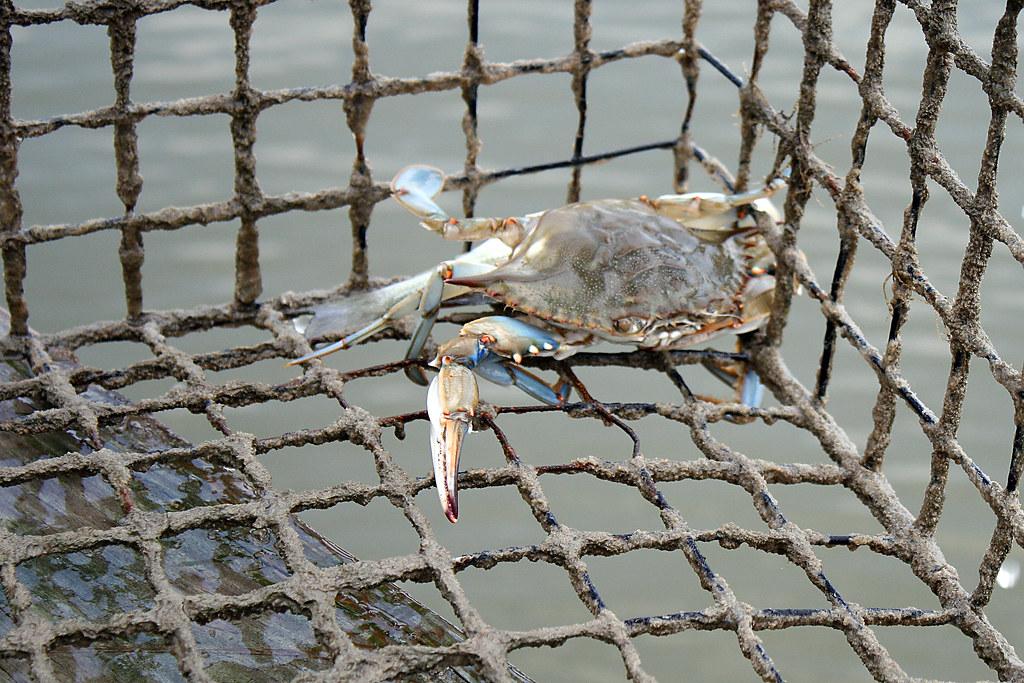 Belmont landing maryland tripcarta for Bill burton fishing pier state park