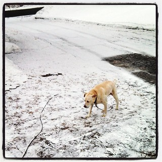 Seriously Mother Nature? #winterwontend #snow #newengland #winter #dogstagram #instadog #labmix