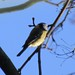 Little birdy by Ms Kat