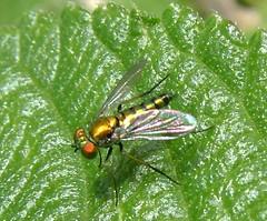 wasp(0.0), flower(0.0), leafhopper(0.0), leaf beetle(0.0), animal(1.0), fly(1.0), leaf(1.0), invertebrate(1.0), macro photography(1.0), fauna(1.0), close-up(1.0), pest(1.0), true bugs(1.0),