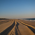 Park ranger pickup truck tracks, Fire Island National Seashore