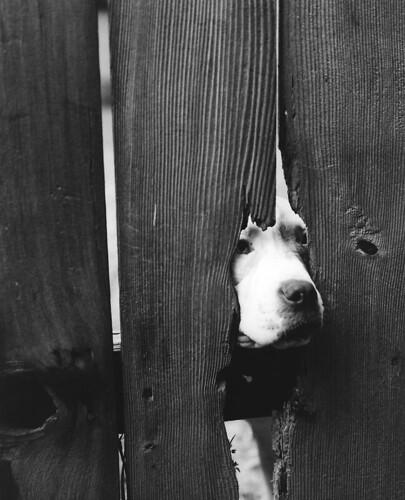 memphis dog